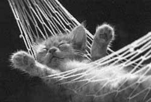 relaxing hammock kitty
